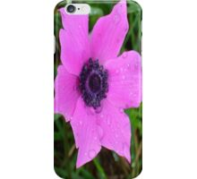 Purple Anemone - Anemone Coronaria Flower  iPhone Case/Skin