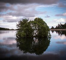 Clatto Trees In The Water by marting04