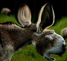 When Donkeys Sneeze by Ladymoose