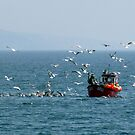 Sorting the Catch by mikebov