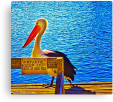 Private Pelican Canvas Print