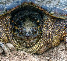 Snapping Turtle III by EelhsaM