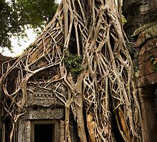 Cambodia - Angkor - Ta Prohm  #06 ... location for film Tomb Raider by Malcolm Heberle