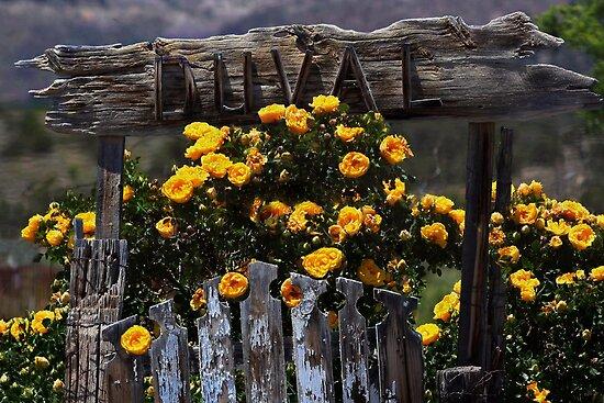 Rose Gate by Arla M. Ruggles