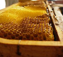 HoneyComb by TinkleBerry