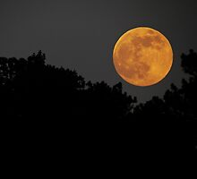 2013 Super Moon Rising by Rogere0829
