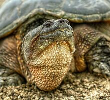 Snapping Turtle VII by EelhsaM