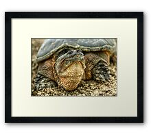 Snapping Turtle VII Framed Print