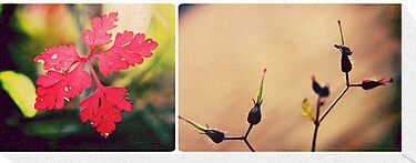 Herb Robert by Sybille Sterk