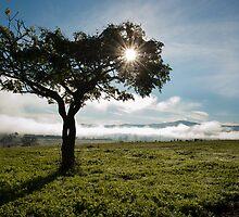 Little Tree by Maria  Bastin