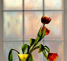 Tulips in Window Light.. by JOSEPHMAZZUCCO
