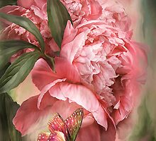 Summer Peonies - Melon by Carol  Cavalaris