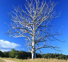 Graceful tree in colour by SharronS