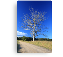 Graceful tree in colour Canvas Print