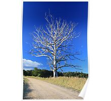 Graceful tree in colour Poster