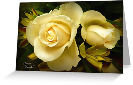 Roses of Love by Elaine Bawden