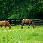 Horse Farm  ^ by ctheworld