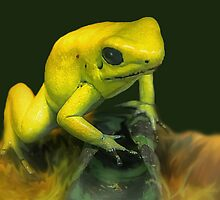 Golden frog by TheaDaams