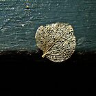 Hydrangea Petal - Only The Best Remains by MotherNature