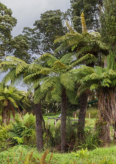 Tasmanian Tree Ferns by Elaine Teague