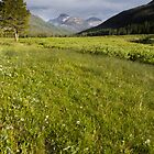 Meadow in the Uinta's  by Alan Mitchell