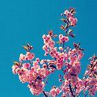 Blossom by LittlePhotoHut