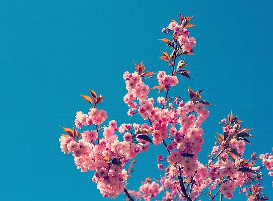 Blossom by LittlePhotoHut