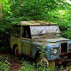 degradation in the woods by bundug