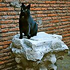 Colosseum Cat by InkCirclesPhoto