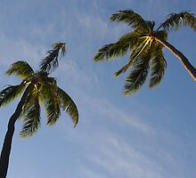 Palms: Honolulu, Hawai'i by Sally Kate Yeoman