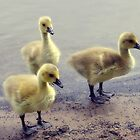 Cute Goslings by LittlePhotoHut