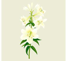 White Lily by rusanovska