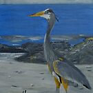 Great Heron on Rocky Beach by towncrier