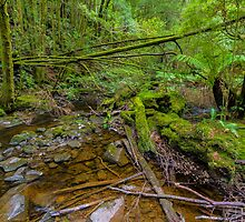 Tasmanian Forest by Elaine Teague