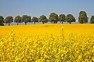 Yellow Field.. [FEATURED] by imagic