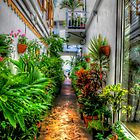 Alley to Paradise by Susan Zohn
