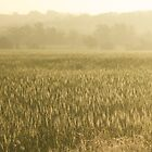 Country View at Sunrise by mikehull221