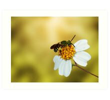the beauty of nature Art Print