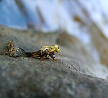 A Couple Of Stone Flies 1 by Thomas Young