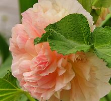 Peach Hollyhock by PineSinger