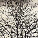 Bare Tree by modernistdesign