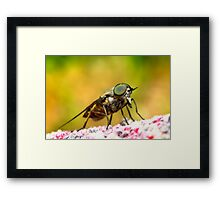 Bad sand fly 01 Framed Print