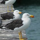 Pacific Gulls by Joel Mason