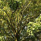 The Tree by LemonLion