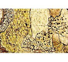 Fields of Mushrooms Photographic Print