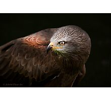 ..a Bird with Class.. [FEATURED] Photographic Print