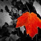 Maple Leaf by Wib Dawson