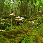 Log Mushrooms by Chad Burrall