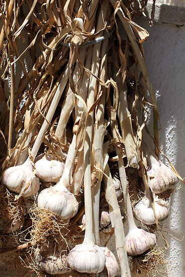 Fresh local garlic by evonealawi