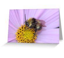 Bumble Bee Macro Greeting Card
